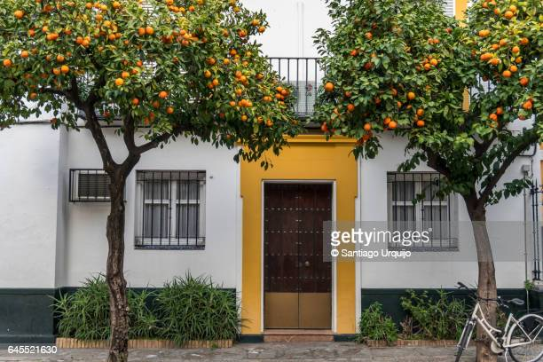 santa cruz neighborhood in seville - orange orchard stock photos and pictures