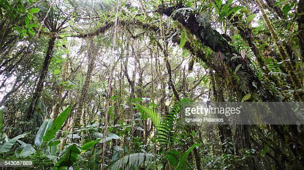 Santa Elena biological reserve in Costa Rica