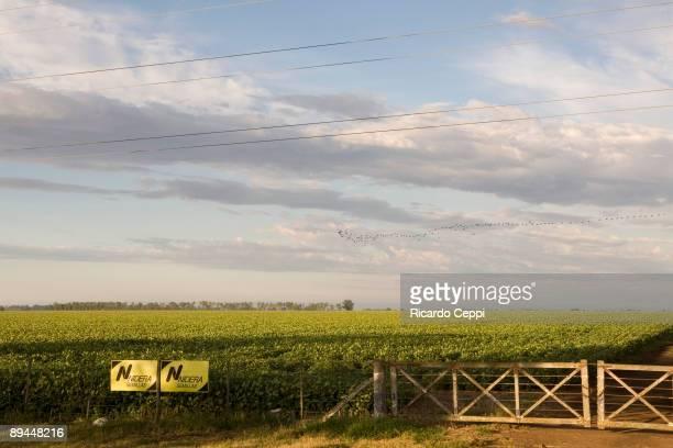 Santa Fe Argentina 270308 Farmers Lockout Soja plantation
