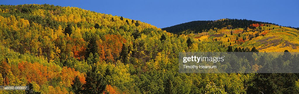 Santa Fe National Forest : Stock Photo