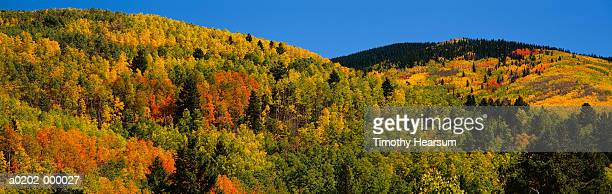 santa fe national forest - timothy hearsum stock photos and pictures