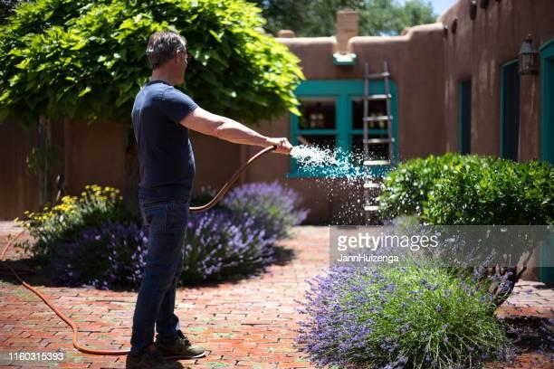 サンタフェ、nm:ラベンダーでいっぱいの男の水やり中庭 - 南西 ストックフォトと画像