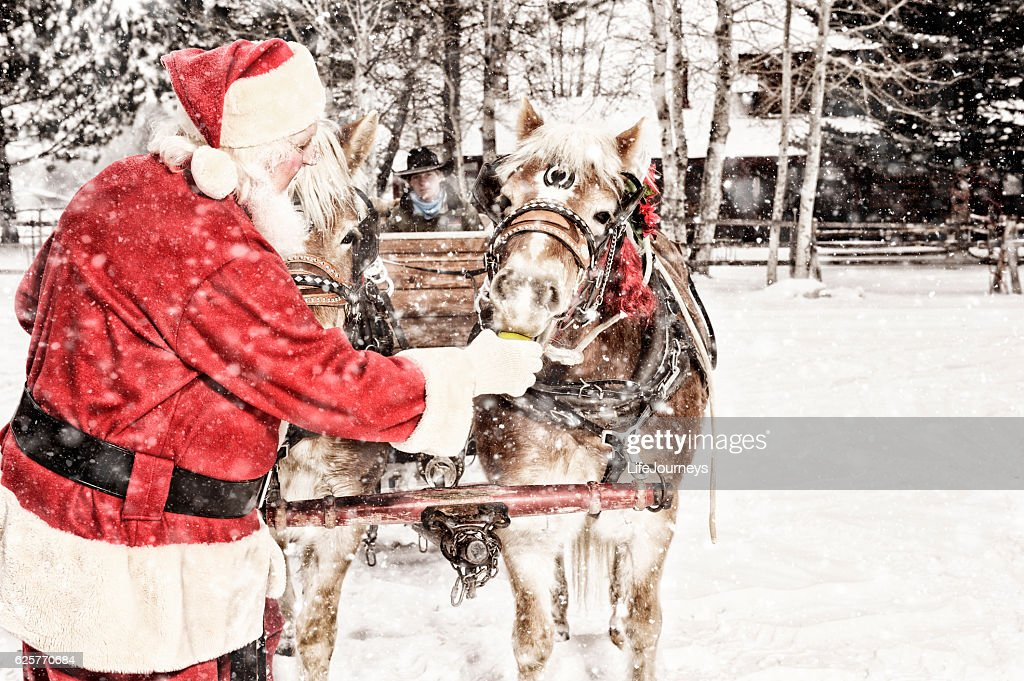 Santa Feeding Green Apples To A Team of Horses : Stock Photo