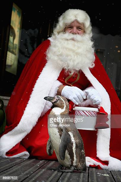 Santa feeds Smiley the penguin as they help open Harrods Christmas World during a photocall on August 4 2009 in London England Christmas World at...