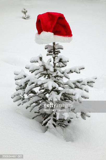 Santa hat on snow covered fir tree, outdoors