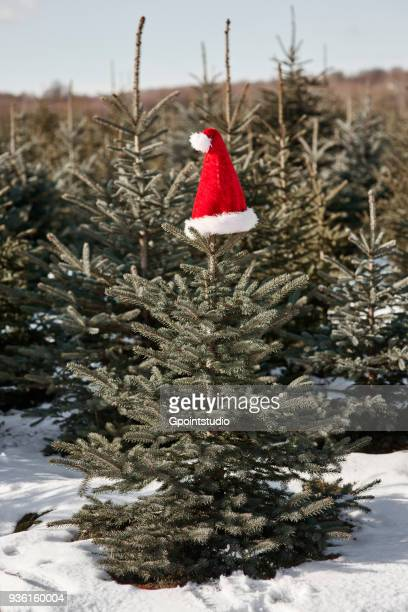 santa hat on top of christmas tree in forest - tree farm stock pictures, royalty-free photos & images