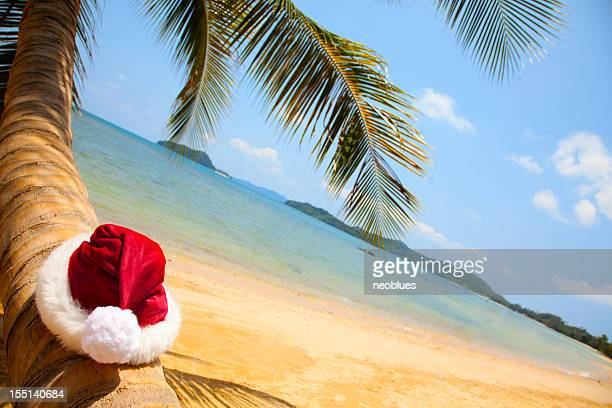 Santa hat resting on Palm tree in the tropics
