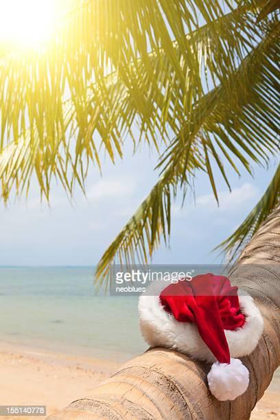 Santa hat sitting on a palm tree