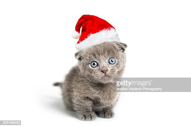santa kitty - christmas kittens stock pictures, royalty-free photos & images