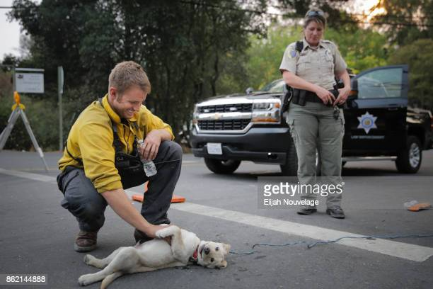 Santa Maria firefighter Cody Joy plays around with Lucky a 13week old yellow Labrador puppy as Fish and Game Warden Jessica Jacobsen watches on...