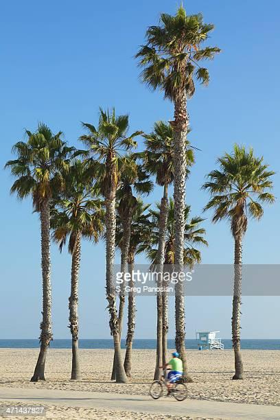 Santa Monica Beach Palm Trees