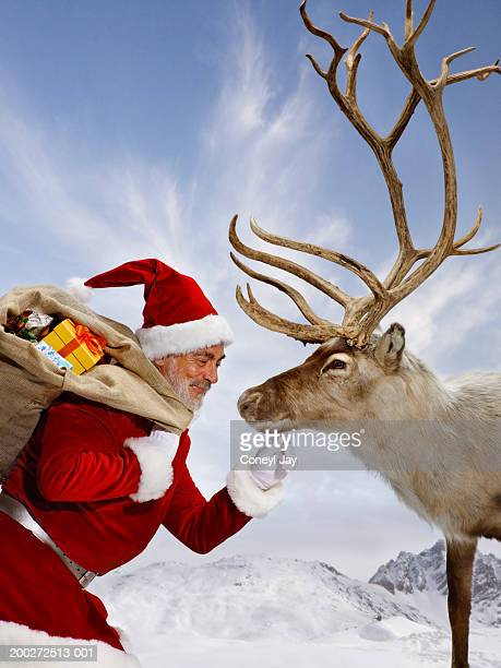 'Santa' touching reindeer on chin (digital composite)