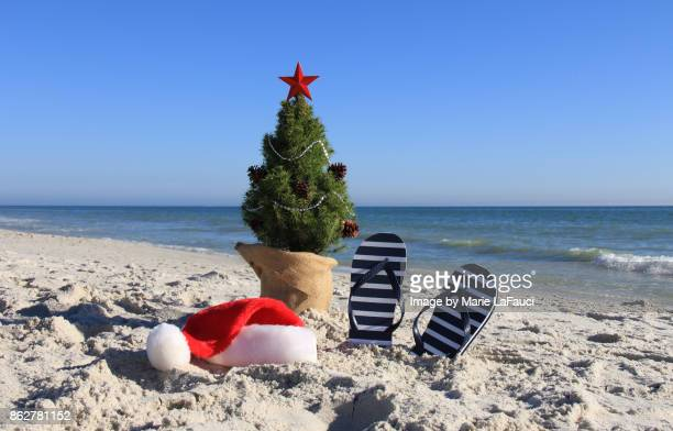 Tropical Christmas.World S Best Tropical Christmas Stock Pictures Photos And