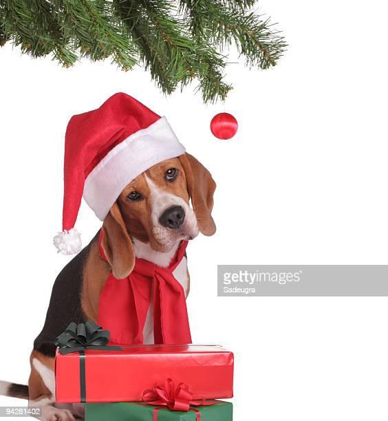 Santa di Beagle