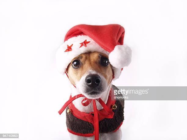 santas elf - santa hat stock pictures, royalty-free photos & images