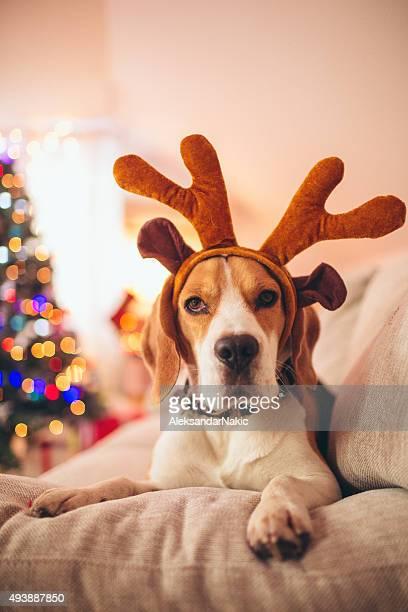Santa's little reindeer