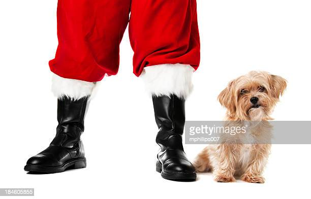 santa's pet - santa close up stock pictures, royalty-free photos & images