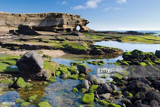 santiago island galapagos - galapagos islands stock pictures, royalty-free photos & images
