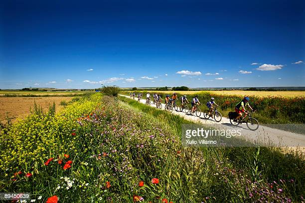 Santiago's Way Jacobean Routes French Way A line of cyclists ride their way through flower and cereal fields at a short distance of Fromista Palencia