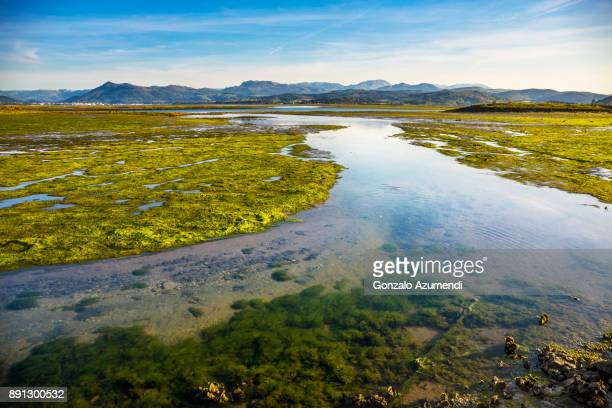 Santoña marshes in Cantabria
