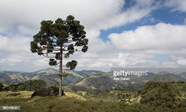 sao francisco xavier , sao paulo , brazil - alex saberi stock pictures, royalty-free photos & images