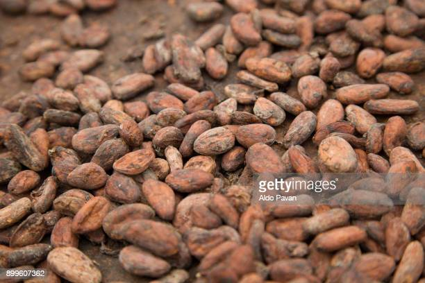 Sao Tomé and Principe, Sao Tomé island, Neves, dried cocoa beans