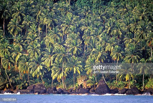 Sao Tome, Porto Alegre, coconut palms.