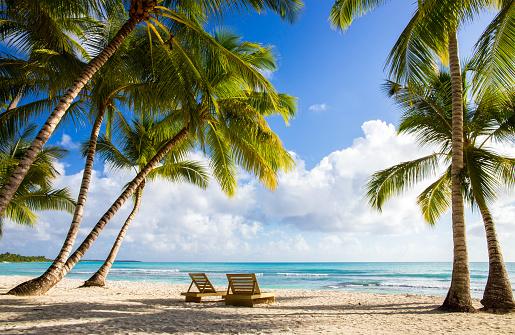 Saona island beach 482612302