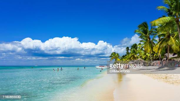 saona island - crmacedonio bildbanksfoton och bilder