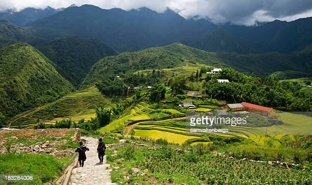 sapa rice fields - vietnam stock pictures, royalty-free photos & images
