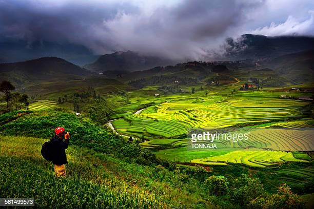 Sapa rice terrace, Vietnam