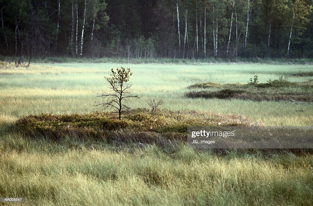 Sapling in a Meadow : Stock Photo