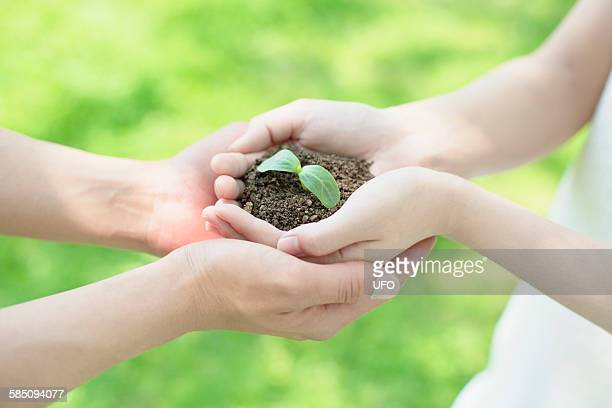 Sapling in couples hand