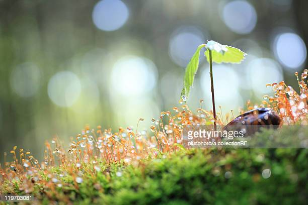 sapling of sawthorn oak tree and moss - plusphoto stock pictures, royalty-free photos & images