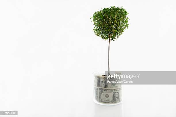 Sapling planted in pot of money