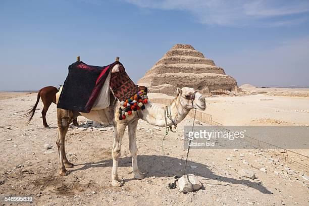 Saqqara Step Pyramid of Pharaoh Djoser Saqqara Egypt