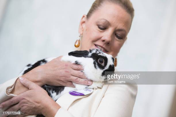 Sara Amundson president of the Humane Society Legislative Fund holds Paxton a 4yearold rescue rabbit during an event to note the importance of using...