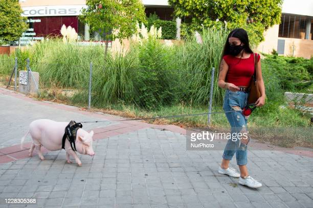 Sara takes her pet, Bacon, for a walk through the streets of the La Elipa neighborhood of Madrid. Bacon is a one and a half year old pig weighing 25...