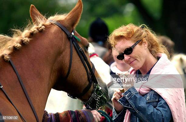Sarah, Duchess Of York At A Horse Show Offering Her Daugher's Pony A Polo Mint.