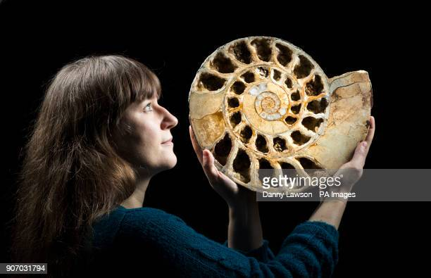 Sarah King curator of natural science at the Yorkshire Museum in York holds a 170 million year old ammonite fossil as she selects items ahead of the...