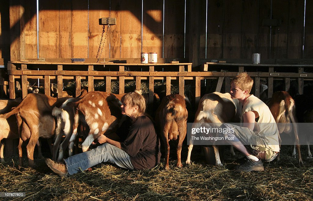 Marlinton, WV Zendik Farm, a commune in West Virginia  News Photo