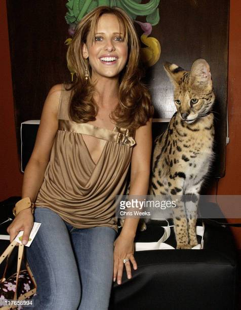 Sarah Michelle Gellar visits Animal Ambassadors' African Servel while sitting on furniture designed by McKinley Pierre