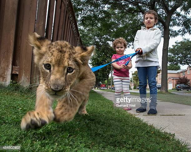Sarah Watkin and her younger sister Elizabeth play with Freda the lion brought to her home by the Bowmanville Zoo Sarah has acute myeloid leukemia...
