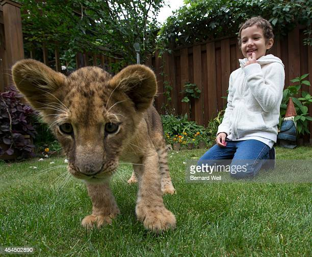 Sarah Watkin plays with Freda the lion brought to her home by the Bowmanville Zoo Sarah has acute myeloid leukemia Despite a stem cell transplant her...
