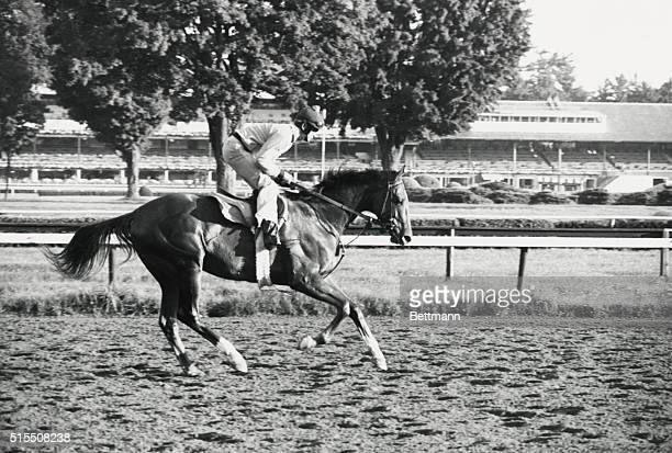 Saratoga Springs NY Exercise rider Graham Bell puts Alydar through a workout preparing for the August 19th running of the $100000 added Travers...