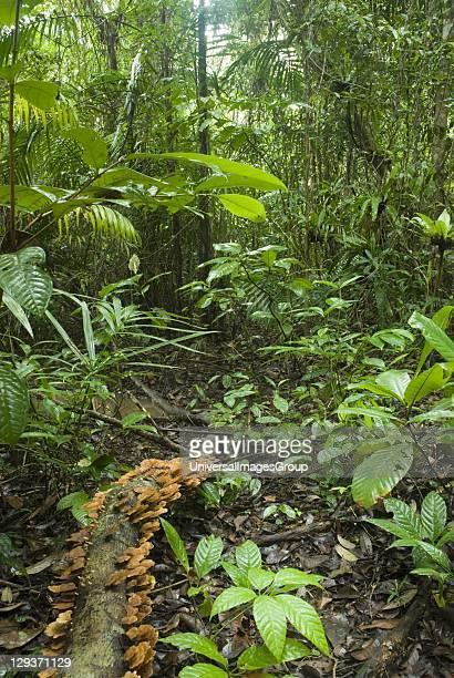 Sarawak Bako National Park Rainforest