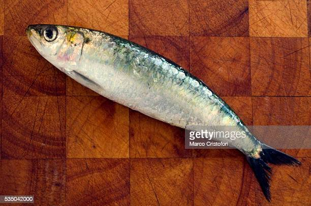 Sardine on Wood Cutting Board