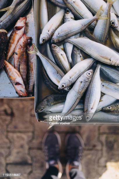 sardines and other fish lying on tin cans for sale at the fish market in marsaxlokk, malta - foco diferencial imagens e fotografias de stock