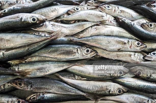 Sardines are sold in the fish Market Mercado dos Lavradores on May 7 2016 in Funchal Madeira Portugal