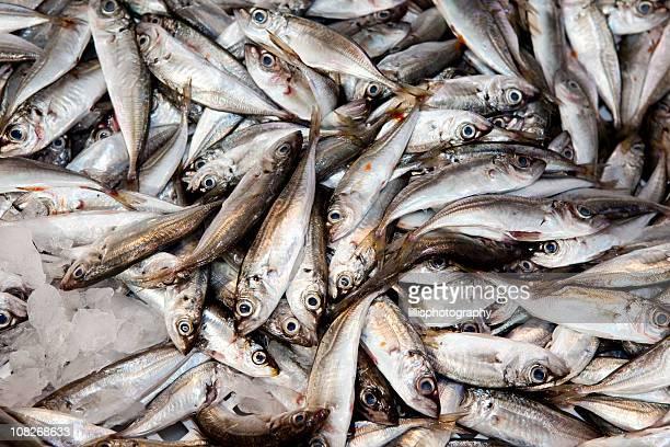 Sardines en mercado en Lisboa, Portugal